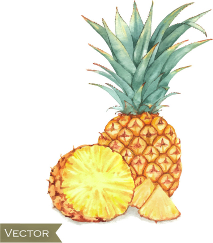 Painted delicious pineapple vector material